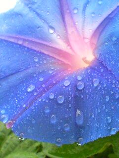 雨の日の琴線